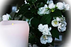 candl1