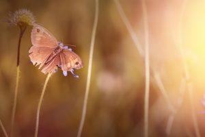 butterfly-1662661_1280