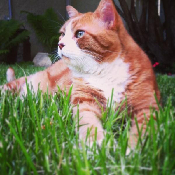 Stan enjoying summer in the garden.