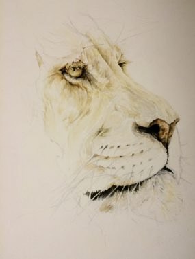 The Lion, Progress shot #2.