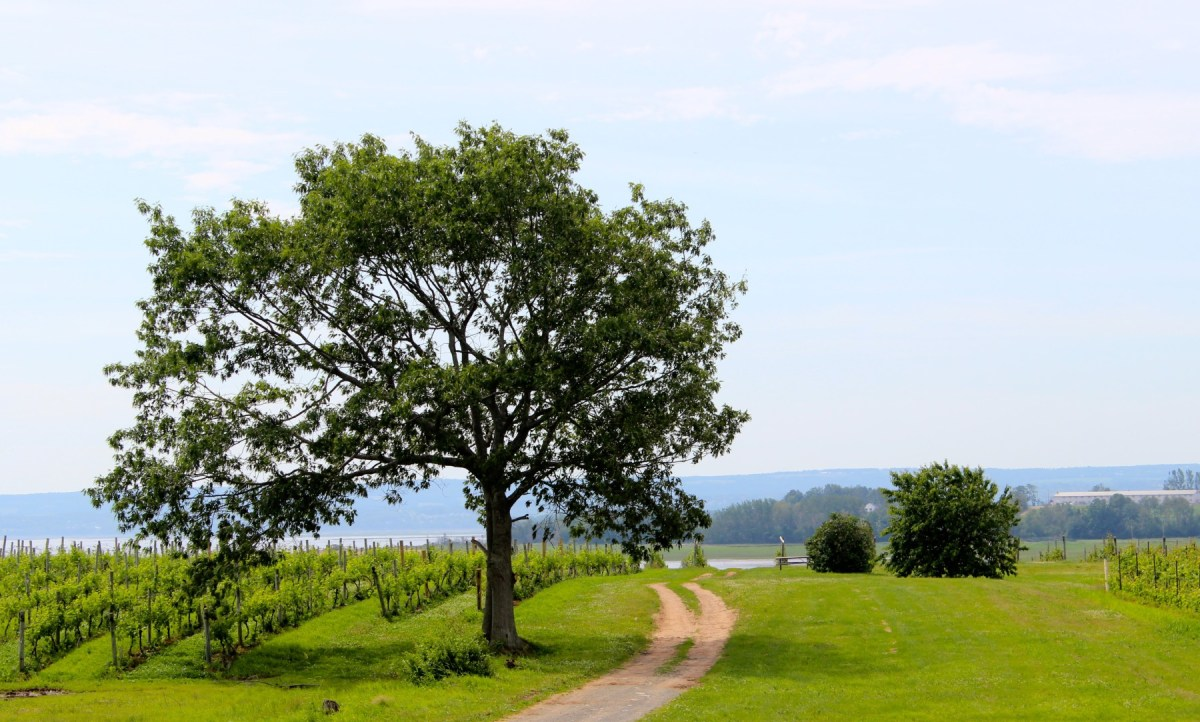 Blomidon Estate Winery, Annapolis Valley, Nova Scotia, Canada.