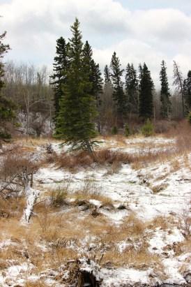 Snow on the ground! Riding Mountain National Park