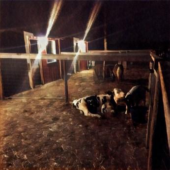 Petting zoos look freaky at night.