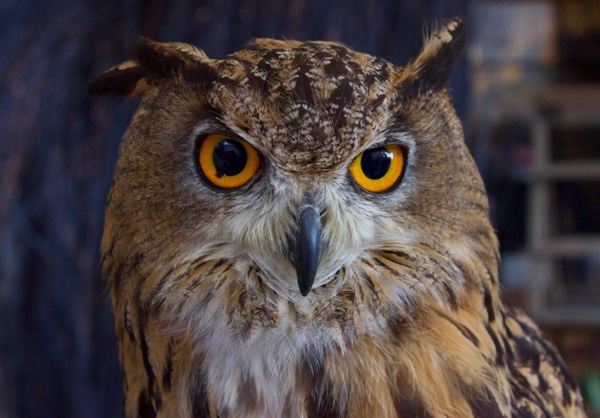 OWL-SOME, Edinburgh, Scotland