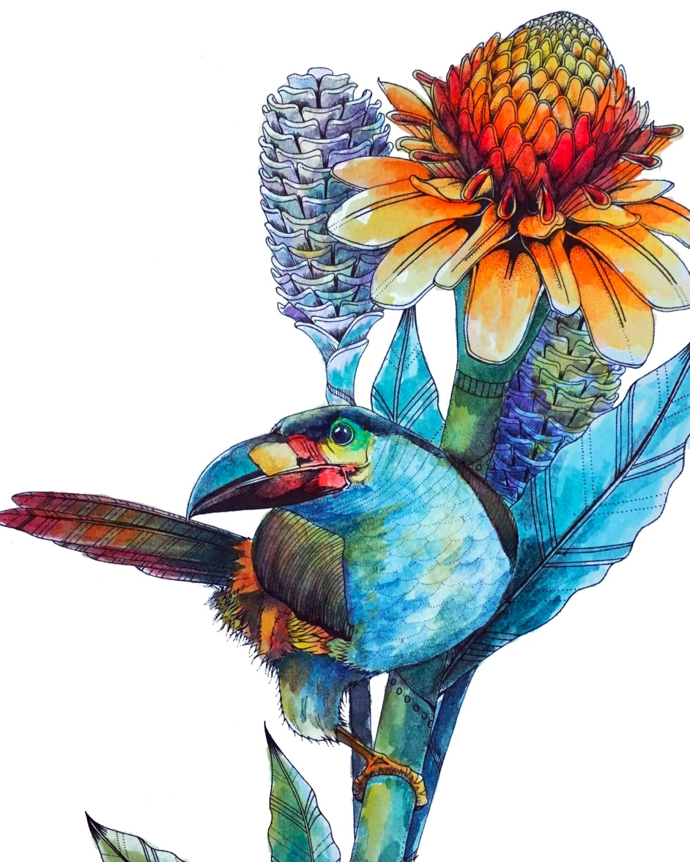 Tucan, Birdtopia by Daisy Fletcher