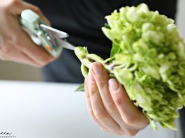 How to keep Hydrangeas Alive? This Quick Tip Will Help. We learn cool things by watching our friends