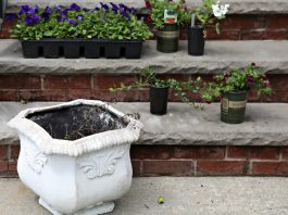 The Best Way to Upgrade the Look of Your Home? Add a Pop of Summer Color with a Planter of Flowers. Here's How. You don't need to own a yard or a deck to plant your own flowers. All you need is some sunlight, a planter and soil.