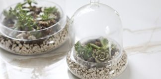 How to Take Care of a House Plant Without Watering It Ever. If you tend to kill plants, join the club. Or, better yet, get some succulents.