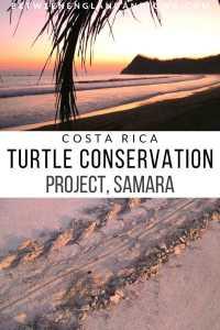 Sea Turtle Conservation in Costa Rica ASVO Samara