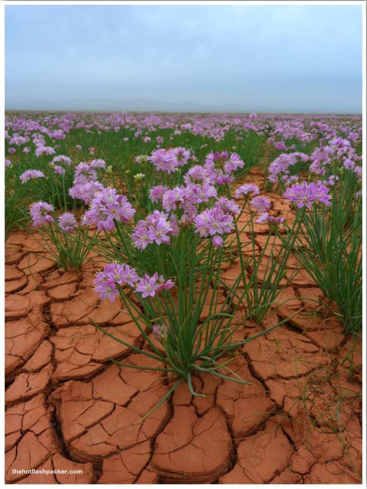Toilets Gobi Desert Mongolia Lisa