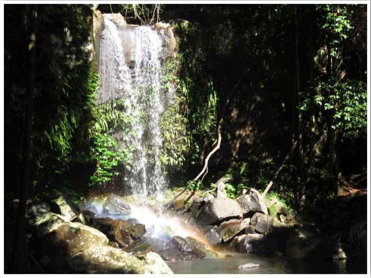 Curtis Falls Mount Tamborine Waterfall