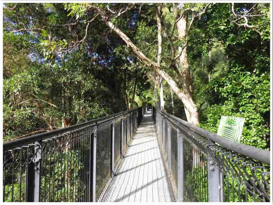 Mt Tamborine Walks Skywalk Gold Coast Australia