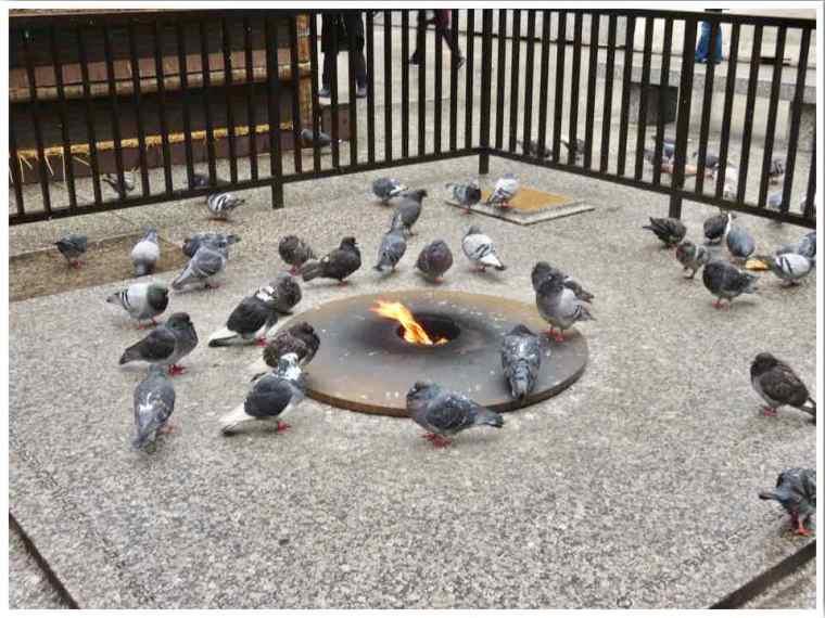 Chicago Pigeons