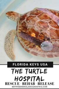 Looking for things to do in the Florida Keys? A stop at the Sea Turtle Hospital in Marathon should be on your radar!