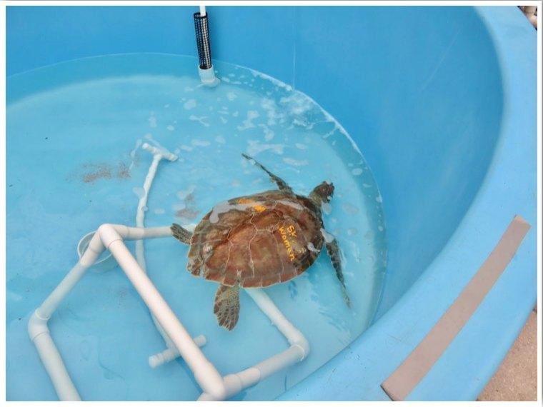 The Turtle Hospital Rehabilitation Tanks Marathon