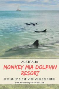 Getting up close with wild dolphins at the Monkey Mia Dolphin Resort in Western Australia!