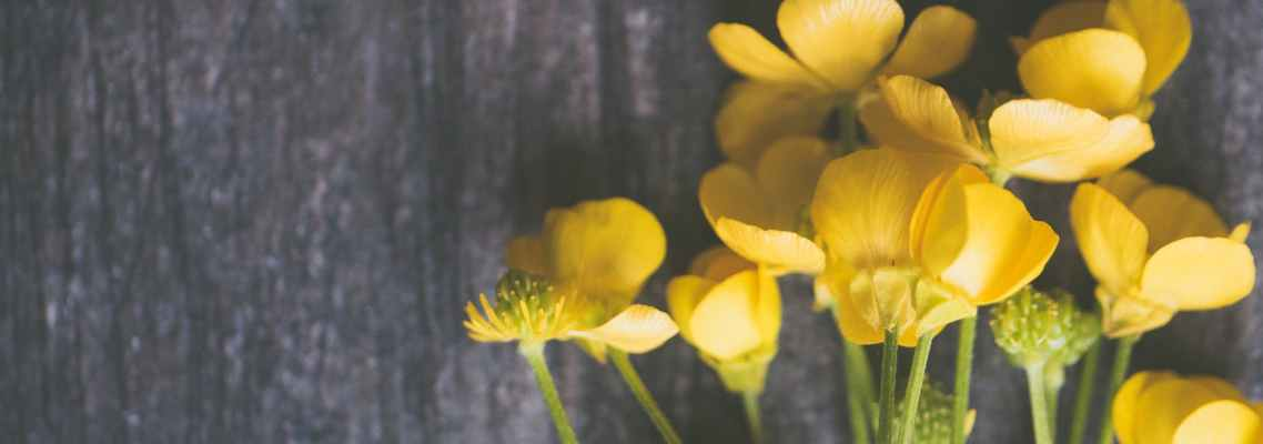 yellow buttercup flowers on grey surface