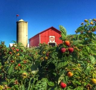 Round up of raspberry recipes