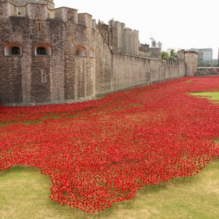 Marking Veterans Day and Armistice Day with poppies and gratitude