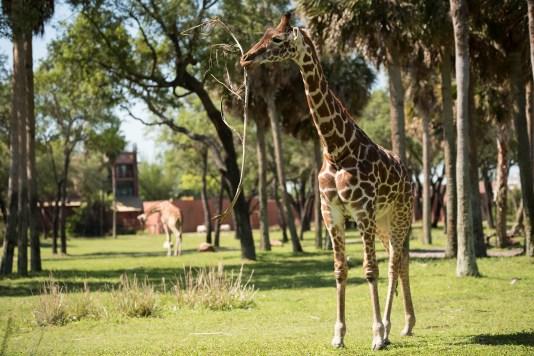 Photo courtesy of Disney, Preston Mack, photographer