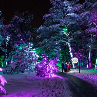 Illuminations: Tree Lights at Morton Arboretum by the numbers