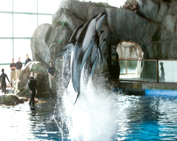 Fun Facts about Dolphins from Shedd Aquarium in honor of Dolphin Awareness Month