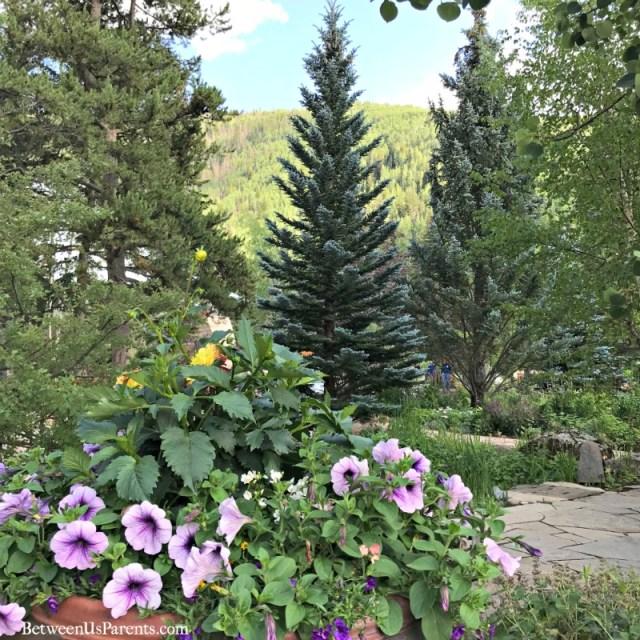 Betty Ford Alpine Gardens in Vail