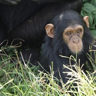 """Jane Goodall explains what """"the very best kind of mother"""" does"""