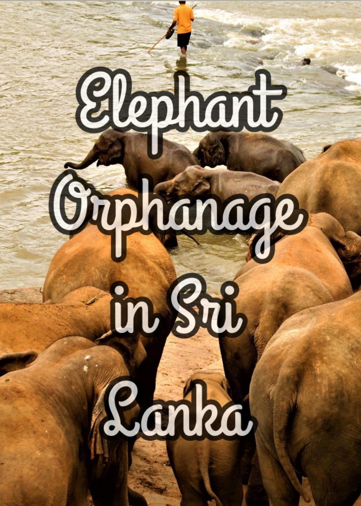 Elephant Orphanage in Sri Lanka
