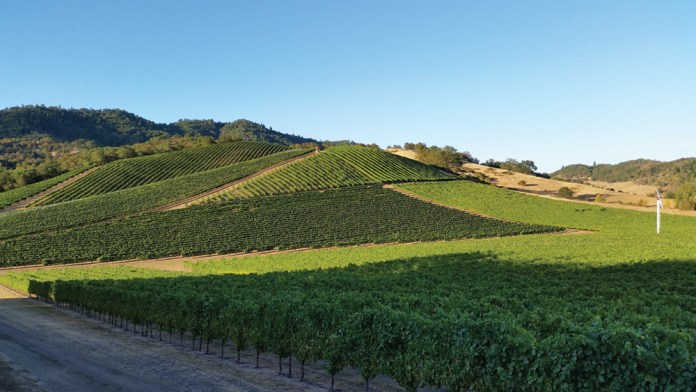 Abacela's estate vineyard planted to Tempranillo copy