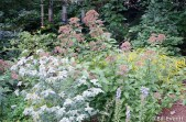 Mountain Mint and Joe-pye Weed