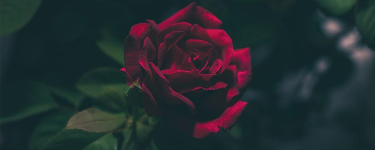 dark fantasy rose