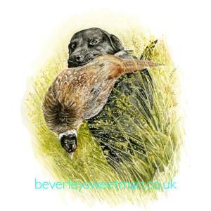 black-labador-retriever-and-pheasant