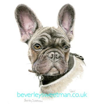 French Bull Dog watercolour painting