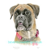 Boxer dog watercolour painting