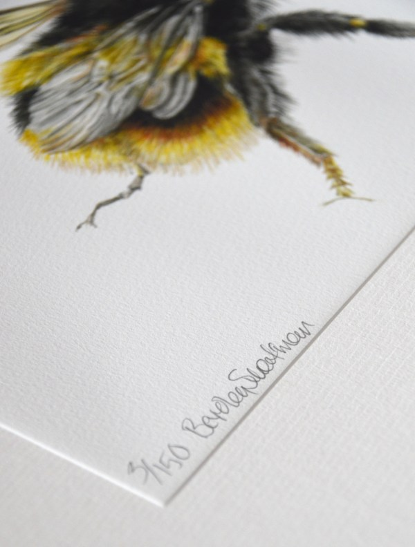 Bumble bee wings watercolour painting limited edition print