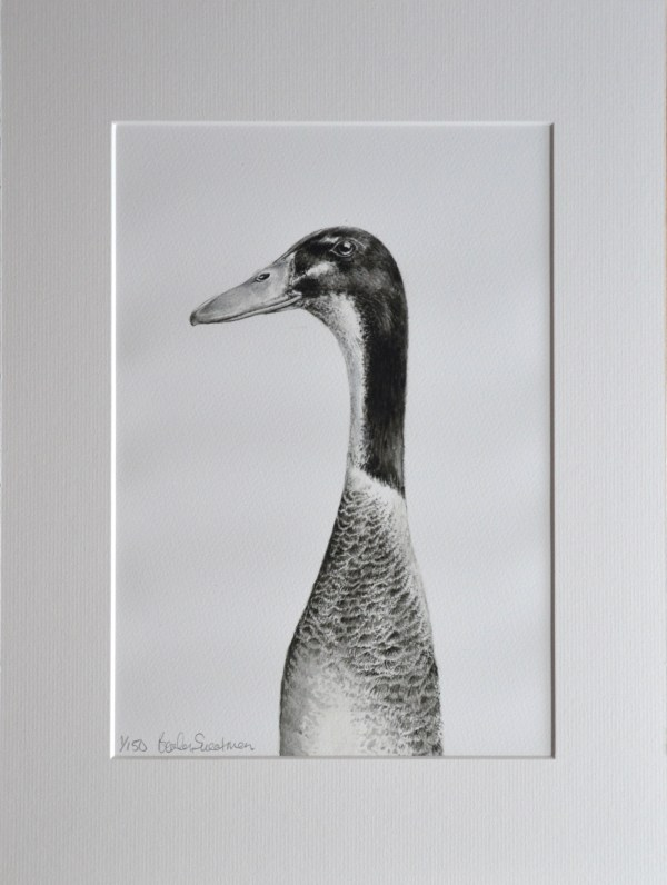 Grey Indian runner duck watercolour painting - limited edition print