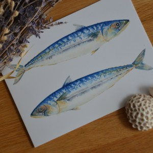 Blue mackerels greetings card