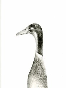 runner-duck