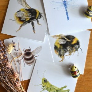insect-card-set