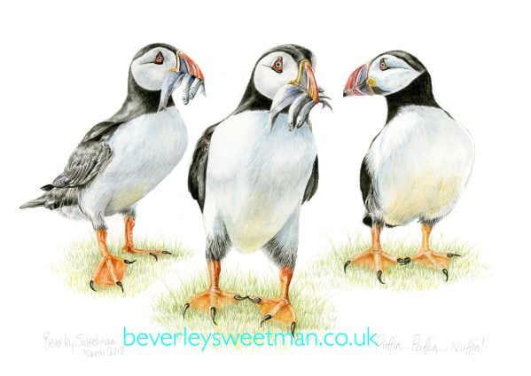 Puffins watercolour painting