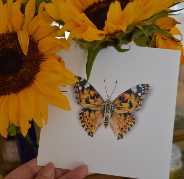 painted-lady-butterfly-Card