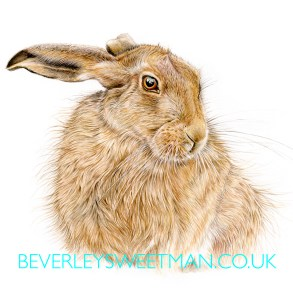 beautiful-hare-print