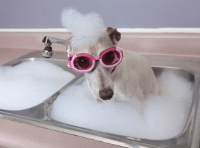Why is dog grooming important?