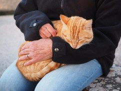 orange tabby cat, in lap, bev scott author, being grateful makes me happy