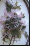 Heloboros Rose
