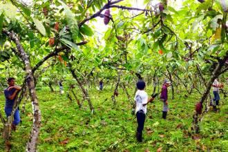solbeso cacao farm