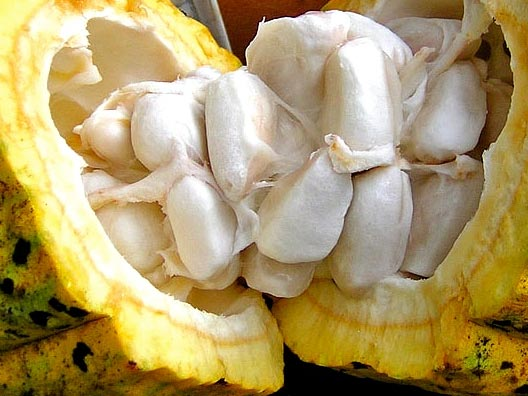 solbeso cacao fruit