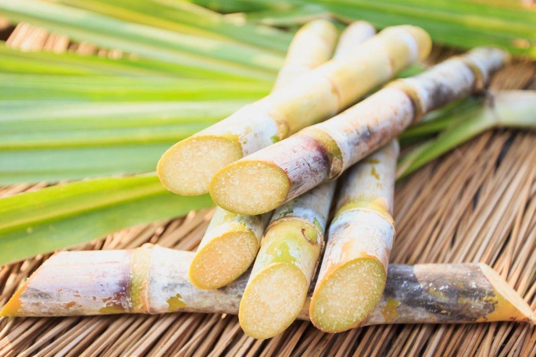 rum sugar cane