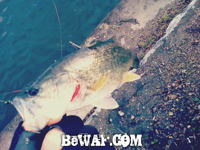 hikone-bass-fishing-06